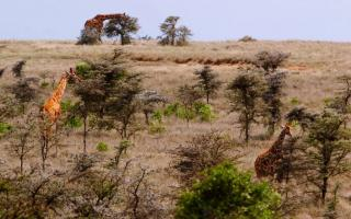 This year, Princeton University is celebrating its 25th anniversary of research, teaching and collaboration at the Mpala Research Centre in Laikipia County, Kenya, while looking toward deepening engagement for the future.